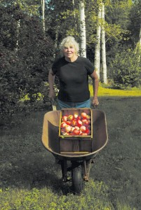Judith Maloney and her wheel-barrow, Catamount Hill Orchard, harvest 2007. JIM LANGONE